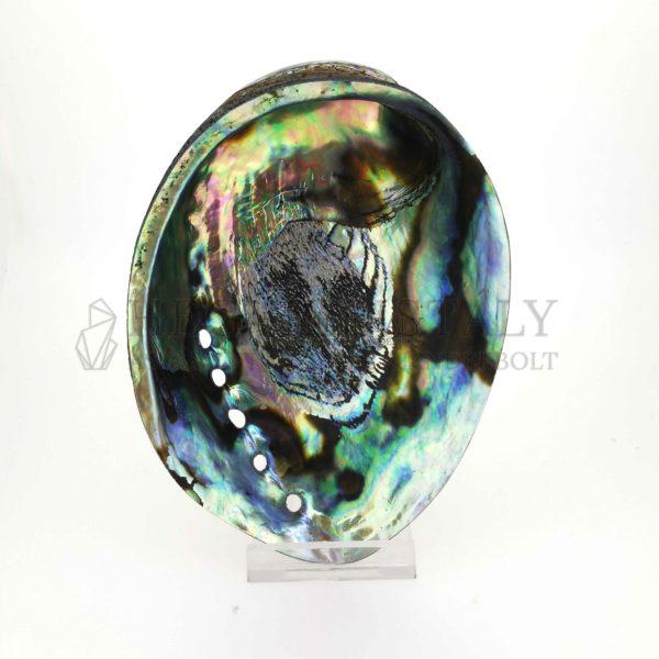 Pávakagyló (Paua Abalone)