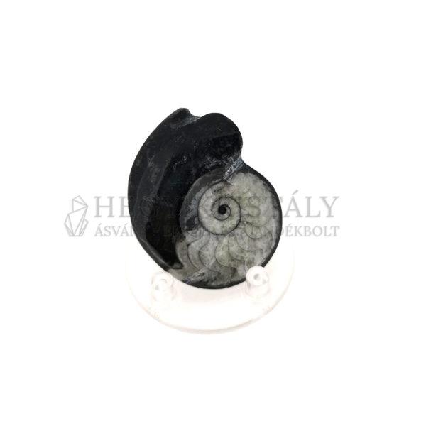 Ammonites spirál