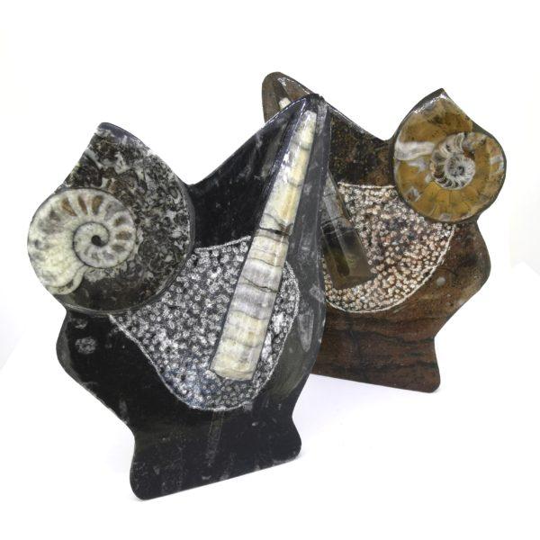 Ammonites mix (talpas)