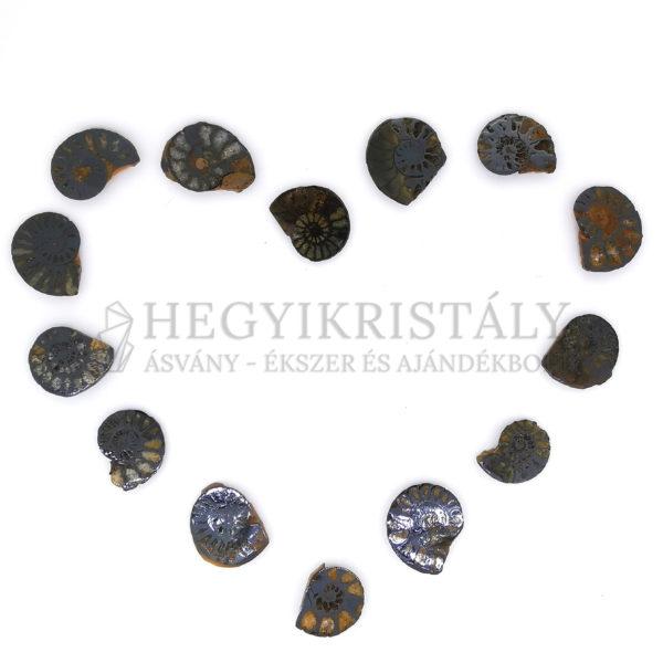 Ammonites kövület (mini)